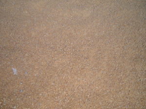 distillers grains for cattle feed