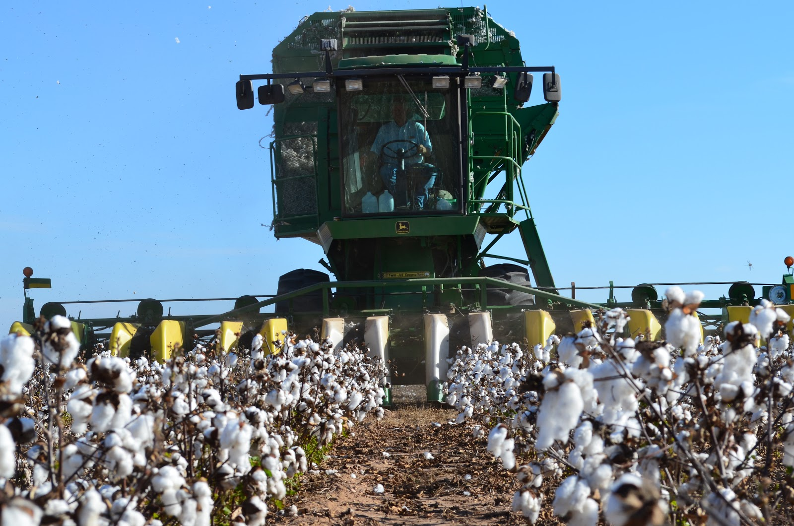 GMO cotton harvest in Texas