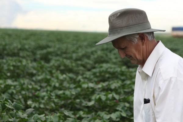 Daniel in a cotton field