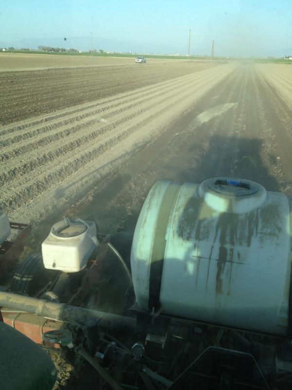 2012 cotton crop planted CA