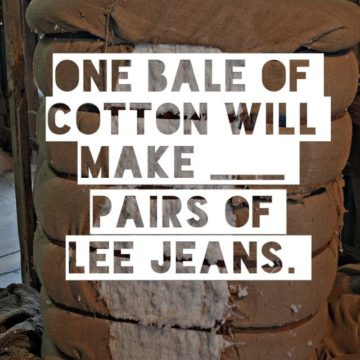 One bale of cotton will make ___ pairs of Lee Jeans