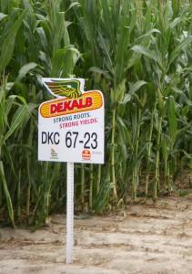 Dekalb corn sign