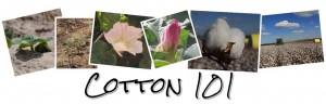 cotton 101 montage