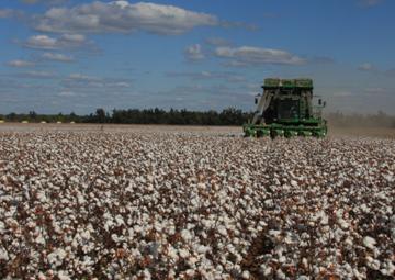 cotton picker on the farm