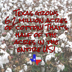 Texas produces more than 6 million acres of cotton, half of the US cotton