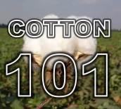 cotton 101