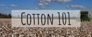 cotton 101 blue