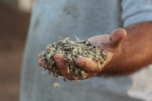 cottonseed by the handful