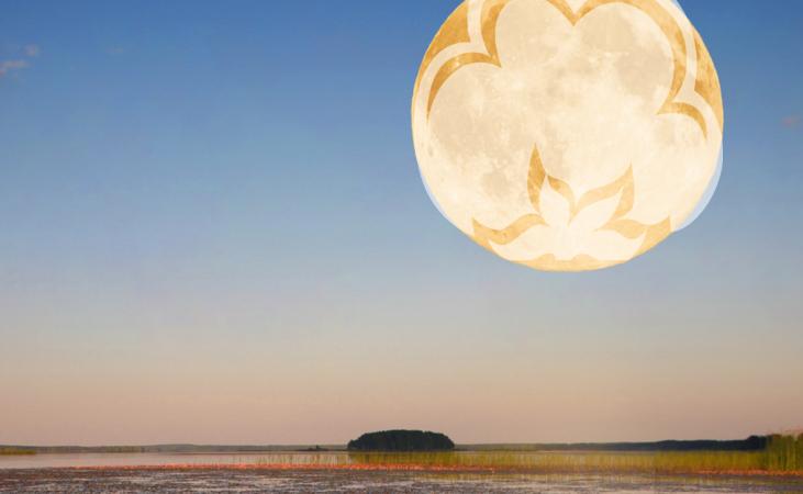 cotton on the moon